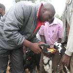 Tagging a Goat in Murole